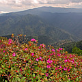 Clingman's Dome From Cliff Top by Alan Lenk