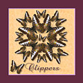 Clipper Butterfly Pin Wheel by Melissa A Benson