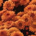 Clockwork Orange by Tom Prendergast