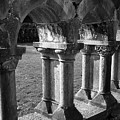 Cloister At Cong Abbey Cong Ireland by Teresa Mucha