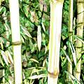 Close Up Big Fresh Bamboo by Jeelan Clark