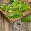 Close Up Fresh Basil Leafs On Rustic Serving Board  by Thomas Baker