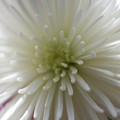Close-up Of A Flower by Cassie Jines