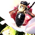 Close Up Of Bumble Bee On Flower by Debra Lynch