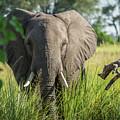 Close-up Of Elephant Behind Bush Facing Camera by Ndp