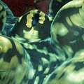 Close-up Of Giant Clam, Tridacna Gigas by James Forte