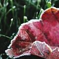 Close Up Of Leaf And Frost by Hunter Kotlinski