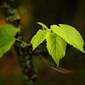 Close Up Of Leaves In Forest by Donald  Erickson
