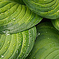 Close-up Of Raindrop On Green Leaves by Panoramic Images