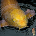 Close Up Of Single Large Yellow Koi Fish With Whiskers by Sharon Minish