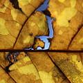 Close Up Of Yellow Leaf by Hunter Kotlinski