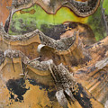 Close Up Texture Of Cut Bananna Tree Trunk by Jason Rosette