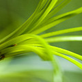 Close View Of Green Flower by Todd Gipstein