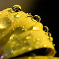 Close View Of Water Droplets by Todd Gipstein