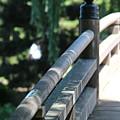 Closeup Of Walking Bridge At Chicago Botanical Gardens by Colleen Cornelius