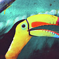 Closeup Portrait Of A Colorful And Exotic Toucan Bird Against Blue Background Nicaragua by Srdjan Kirtic