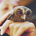Closeup Portrait Of A Girl Holding And Tending A Small Baby Owl In Her Hands by Srdjan Kirtic