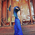 Closeup Portrait Of A Peacock Peafowl by Srdjan Kirtic