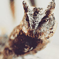 Closeup Portrait Of A Young Owl Looking At The Camera by Srdjan Kirtic