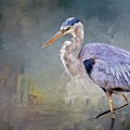 Closing-in, Great Blue Heron by Flying Z Photography by Zayne Diamond