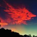 Cloud And Tree by Braden Moran
