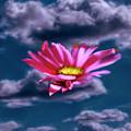 Cloud Flower.  by Leif Sohlman