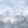 Cloud Walk Forest by Aliceann Carlton