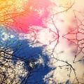 Cloudburst Tree Kaleidoscope by Itsonlythemoon
