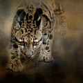 Clouded Leopard On The Hunt by Jai Johnson