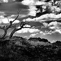 Clouds And A Tree Baw by Jeff Swan