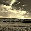 Clouds And Cornfields by Dani McEvoy