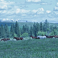 Clouds And Horses by Eleszabeth McNeel