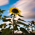Clouds And Sunflower In Motion by Alissa Beth Photography