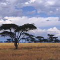 Clouds Over The Masai Mara by Sandra Bronstein