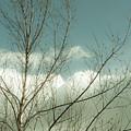 Cloudy Blue Sky Through Tree Top No 1 by Ben and Raisa Gertsberg