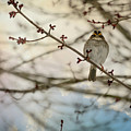 Cloudy Finch by Trish Tritz