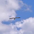 Cloudy Skies by Maria Keady