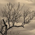 Cloudy Sky Tree by Buddy Scott