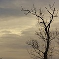 Cloudy Tree 2 by Buddy Scott
