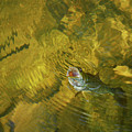 Clouser Smallmouth by Randy Bodkins