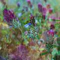 Clover Field Impressions by Sheryl Karas