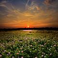 Clover Field by Phil Koch