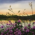 Clover Sunrise  by Sharon Duguay