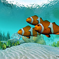 Clownfish by Corey Ford