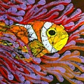 Clownfish I  by Kay Shaffer