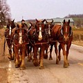 Clydesdale Amish Plow Team by Chris Flees