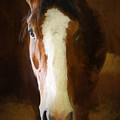 Clydesdale by Claudia Daniels
