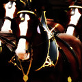 Clydesdales by Coleman Mattingly