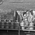 Co-op Dairy Milk Process by Jack Delano