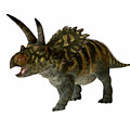 Coahuilaceratops Profile by Corey Ford